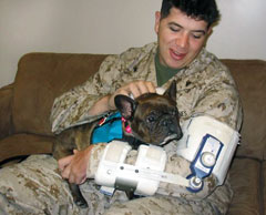 Dog and Serviceman